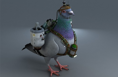 Turbo pigeon delivery Content Marketing for small businesses My Words Work For You